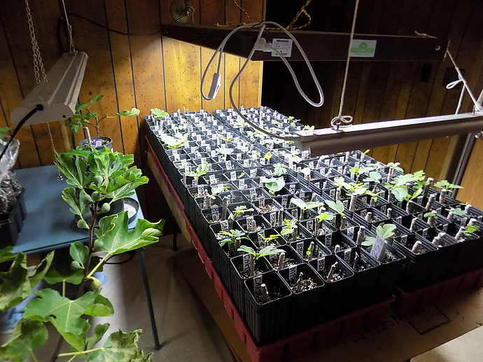 cuttings%20in%20LR%20and%20kitchen%2010%2025%2019%20004