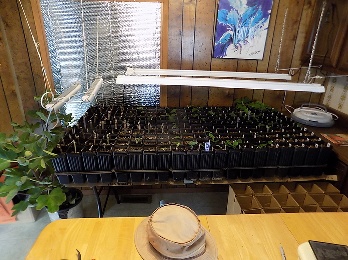 cuttings%20in%20LR%20and%20kitchen%2010%2025%2019%20007