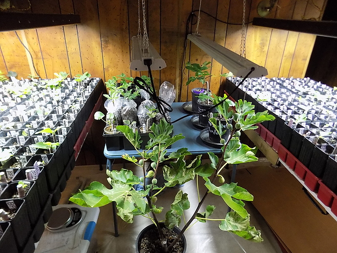 cuttings%20in%20LR%20and%20kitchen%2010%2025%2019%20003