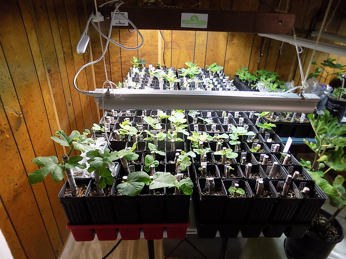 cuttings%20in%20LR%20and%20kitchen%2010%2025%2019%20002