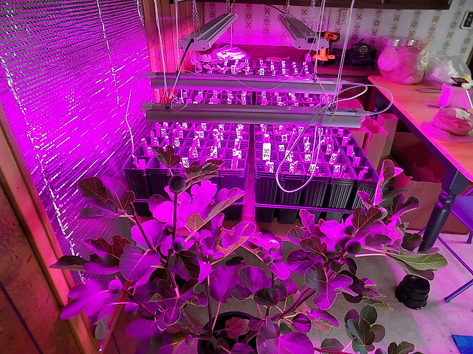 cuttings%20in%20LR%20and%20kitchen%2010%2025%2019%20006