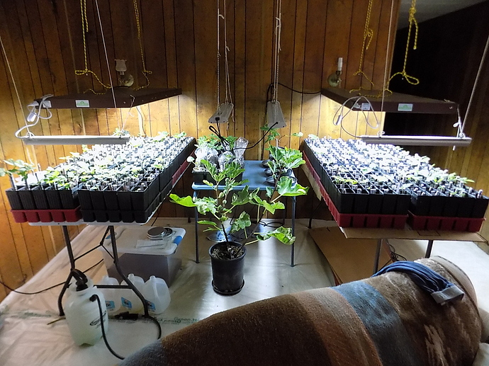 cuttings%20in%20LR%20and%20kitchen%2010%2025%2019%20001