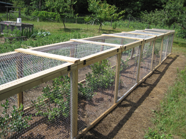Blueberry Cage Roof Question General Fruit Growing