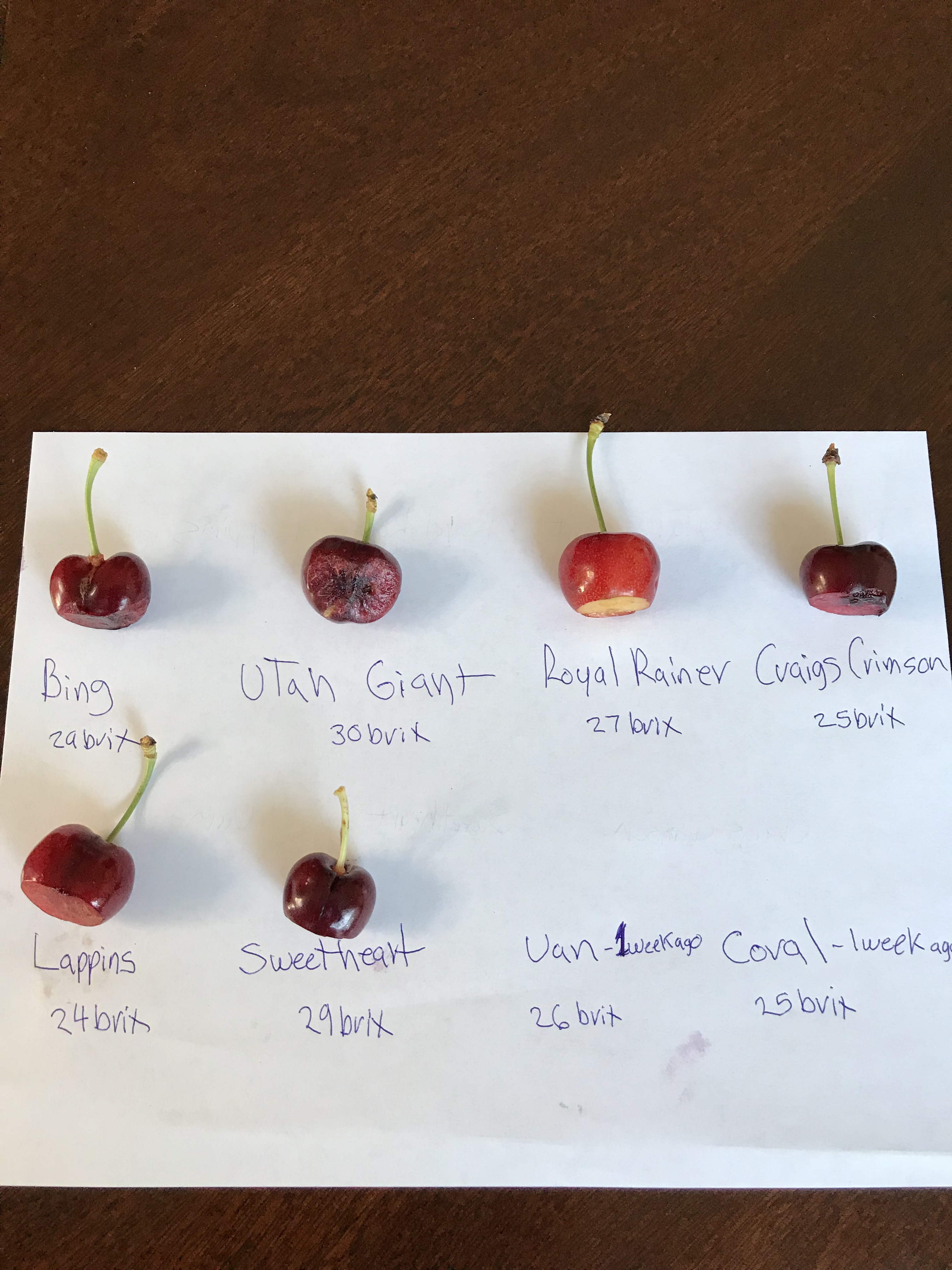 Costco's most expensive cherry - General Fruit Growing - Growing Fruit