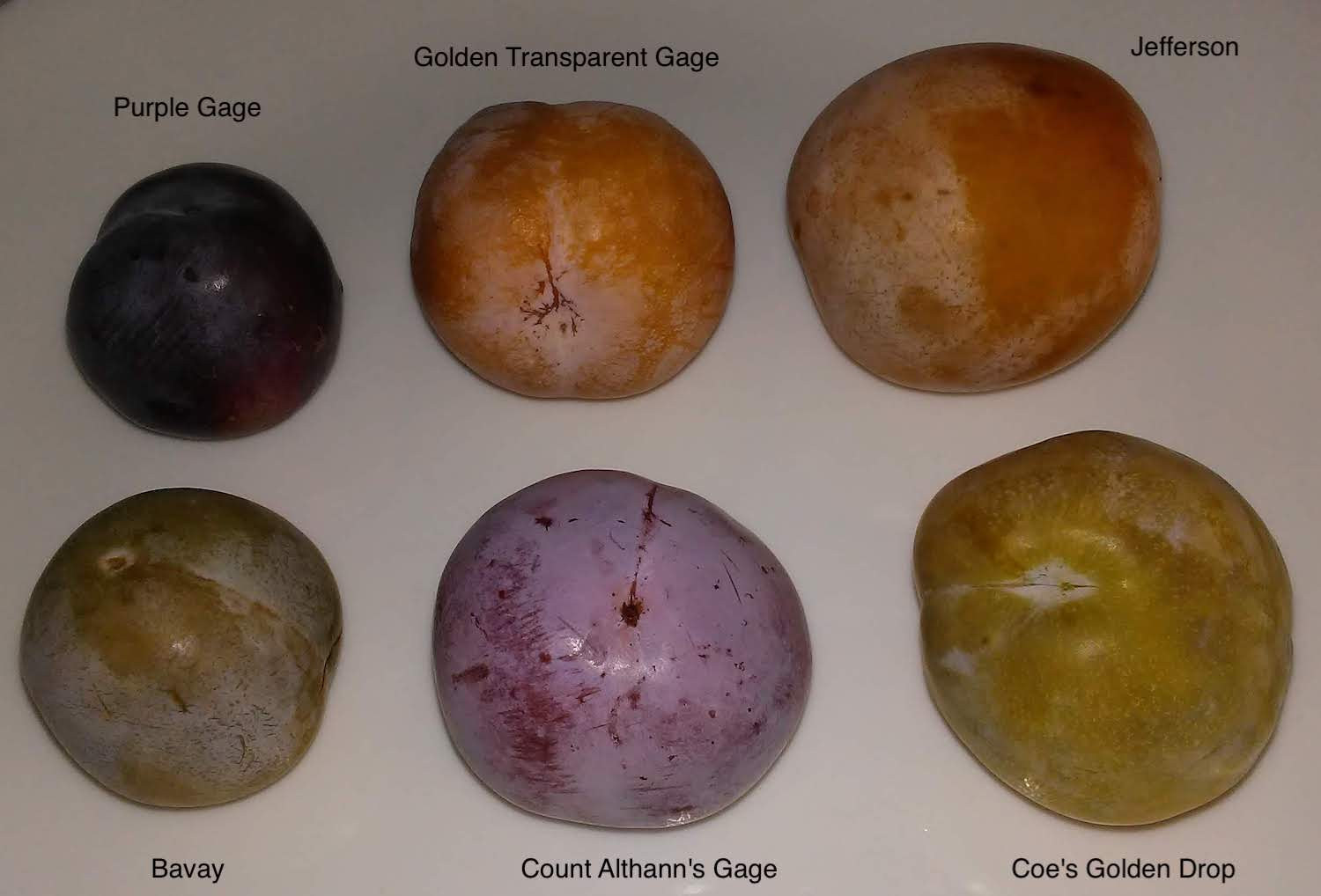 Plums_Gages_2019-08-10_photo-1