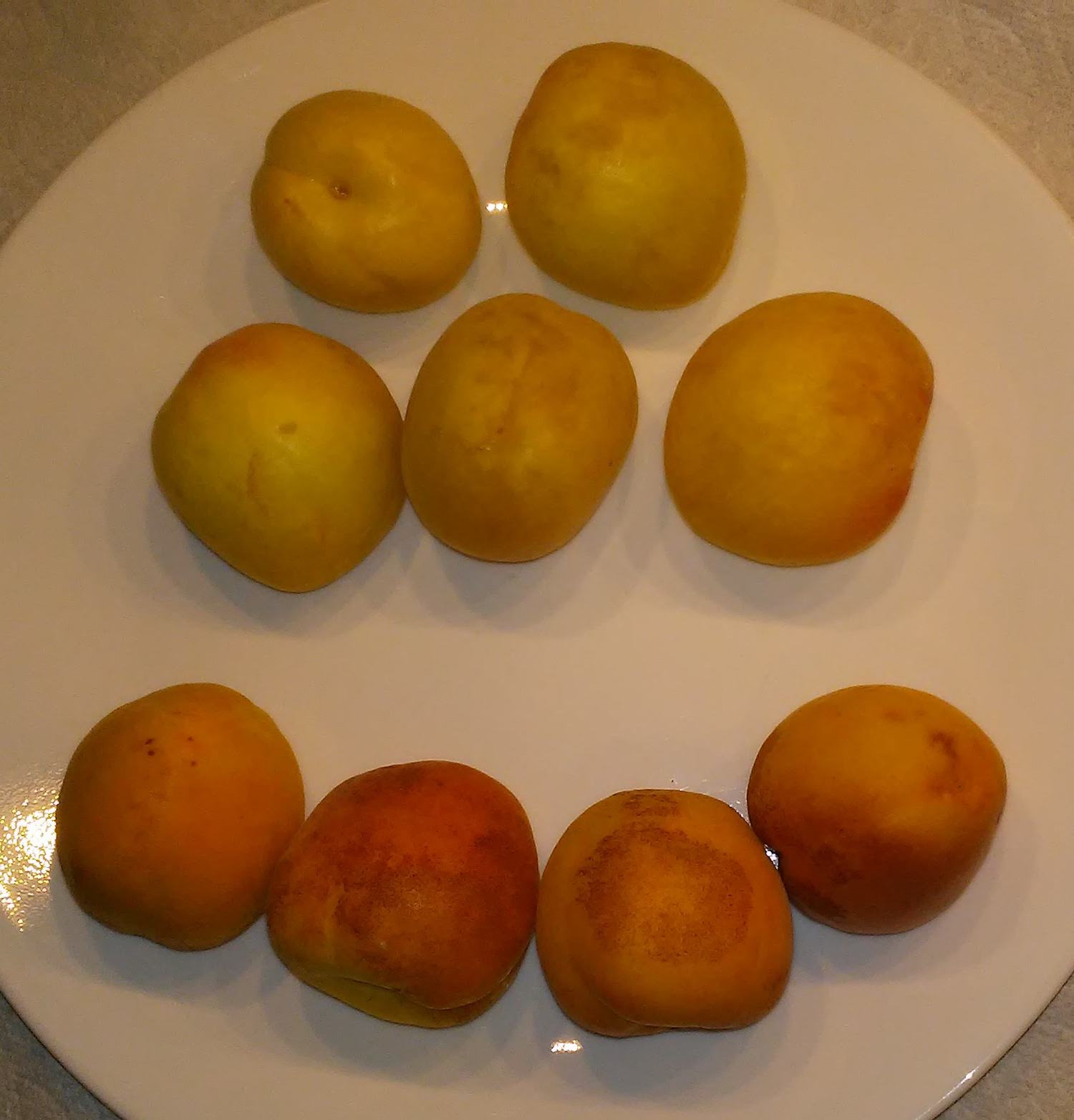 Apricots_Afghanistan_Sparks-Mammoth_2019-06-23
