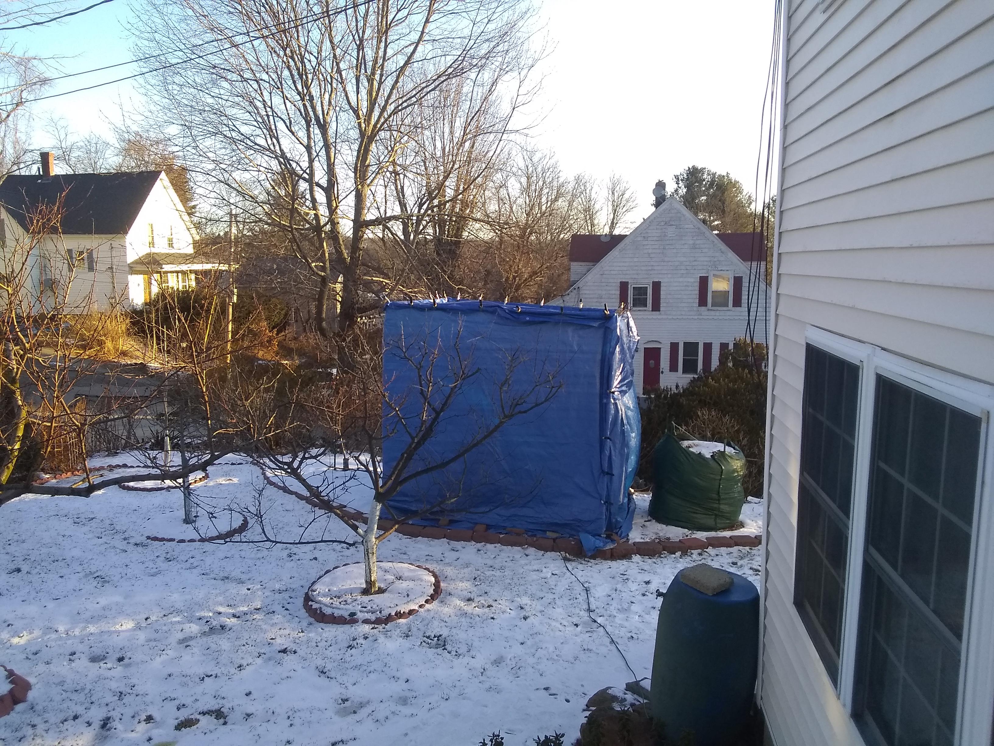 Winter Protection Report General Fruit Growing Growing Fruit