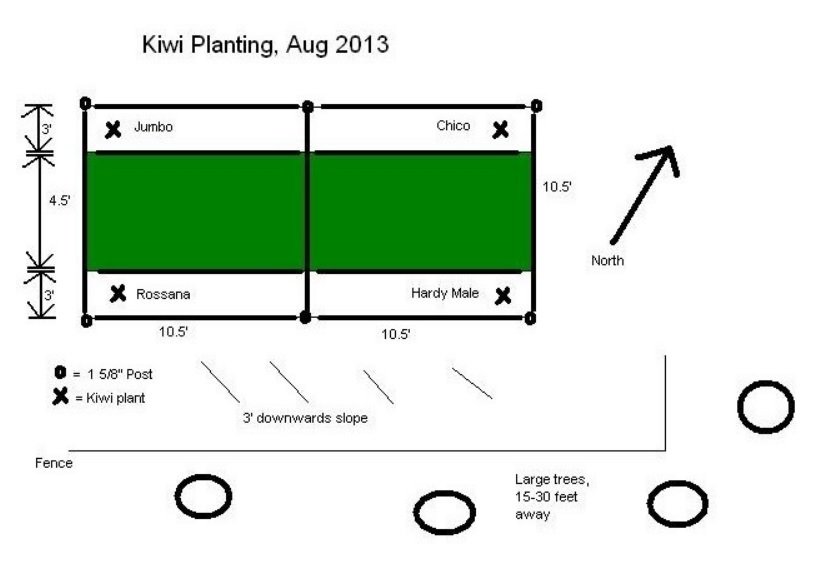 Hardy Kiwi Growers    What Do You Use For A Trellis