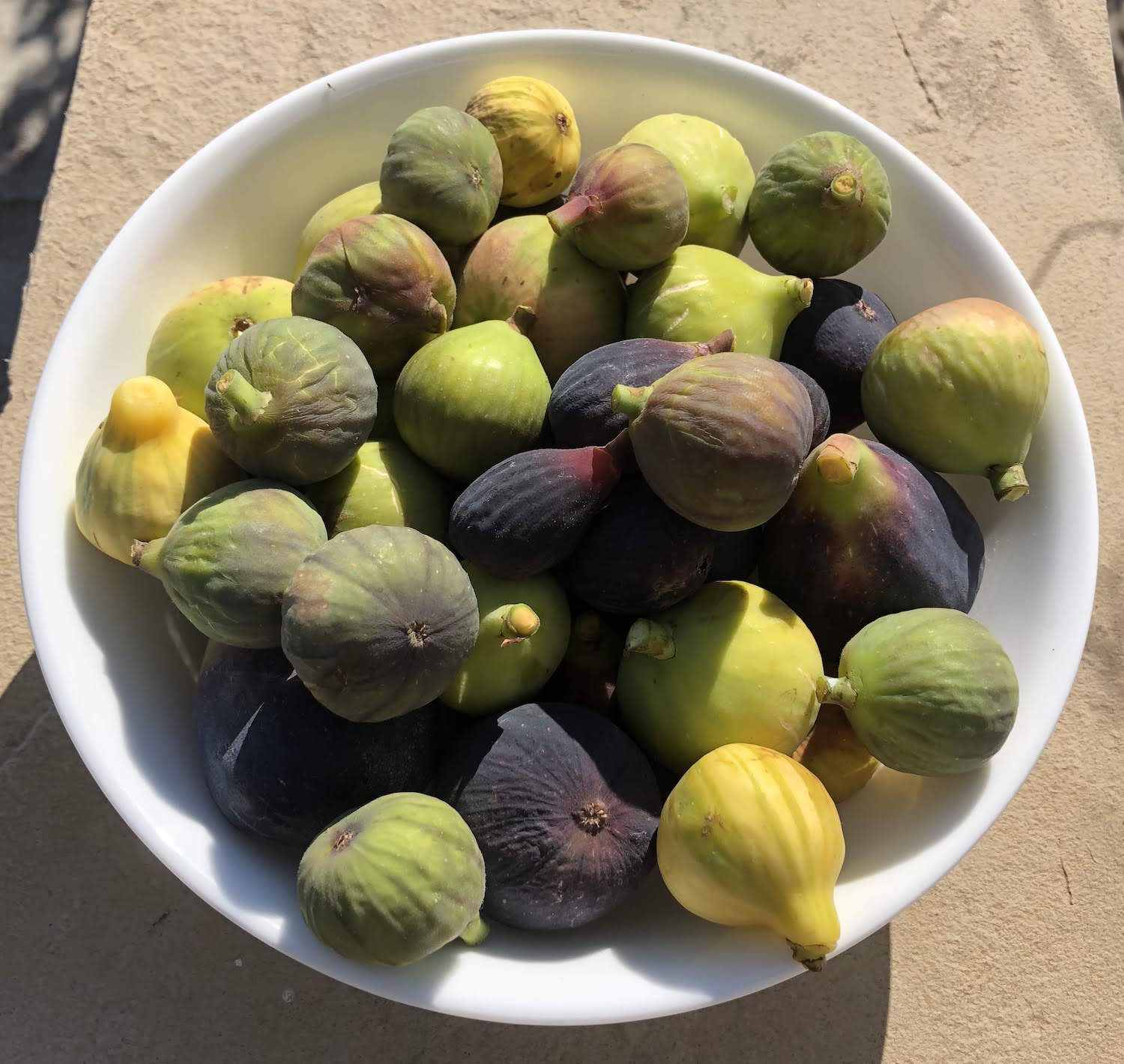 Figs_in_bowl_2018-08-26